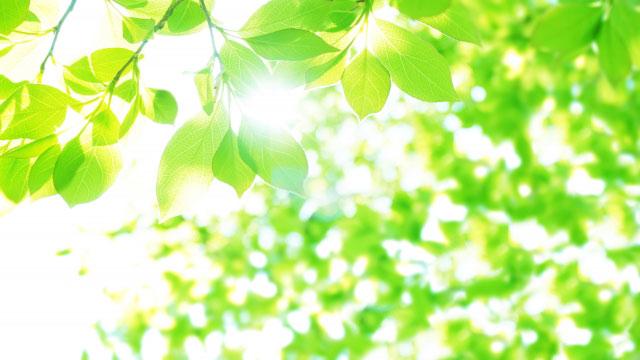 地球環境にやさしく エコ